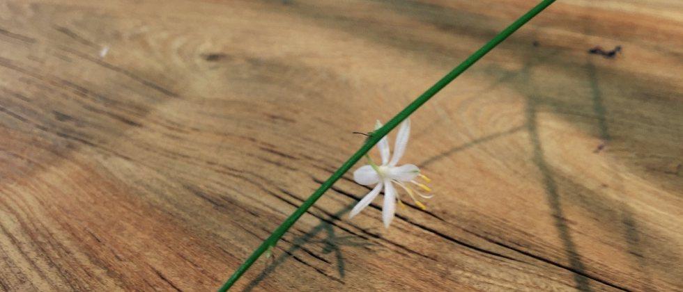Tipps Für Gartenmöbel Onlineshop Fotos Von Möbel Dekoration